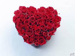 صور قلوب ورد اجمل صور قلوب ورود احضان الحب
