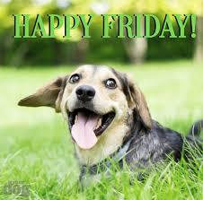 happy friday dog