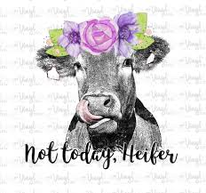 Waterslide Decal Not Today Heifer Cow Licking Nose With Purple Flowers My Vinyl Cut