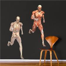 Human Muscle And Skeleton Mural Decal Doctor Wall Decal Murals Primedecals