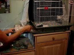 how to clean a bird cage in 3 minutes