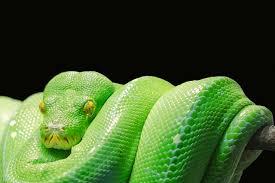 dream meaning of snake dream