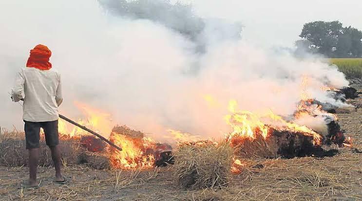 "Image result for haryana farmers burning"""