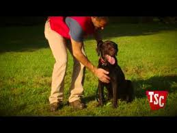 Training Your Pet For An Underground Wireless Fence Youtube