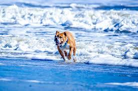 Dog Rules on Folly Beach | FollyBeach.com®