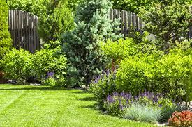 a flower garden in the backyard stock