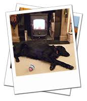 Oxford dog boarding testimonial | Effie May