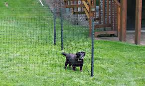 Small Dog Fence Dog Fencing Options