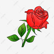 Red Roses Png Images Vector And Psd Files Free Download On Pngtree
