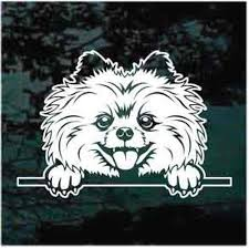 Pomeranian Peeking Decals Car Window Stickers Decal Junky