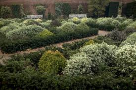 Landscape Ideas Boxed In By Boxwood 5 Shrubs To Try Instead Gardenista