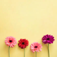 four beautiful flowers free photo