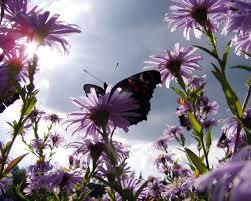 صور ورد Hd احلي الوان ورد باقات زهور جميلة