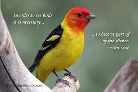 become part of the silence bird quotes birds birds flying