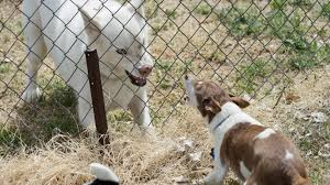 How To Stop The Fence Wars 4 Tips For Dogs Barking At Each Other The Dog People By Rover Com
