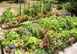 planning for your first vegetable garden