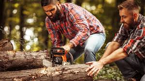 Reasons To opt For Tree Removal Services - BeautyHarmonyLife