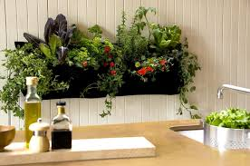 12 lovely indoor herb gardens that will