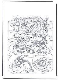 Krokodil 1 Kleurplaten Dierentuin