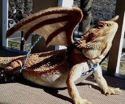 bearded dragon harness with wings