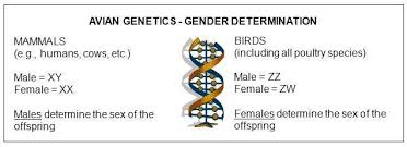 poultry genetics an introduction