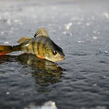 b fishing wallpapers top free b