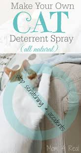 homemade cat deter spray stop the
