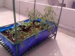 roof top vegetable garden module in