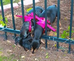 Cher And Daffy Dog Gamutt