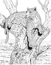 Leopard Sits On Tree Kleurpotloodtekeningen Kleurplaten Dieren