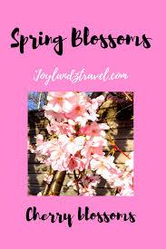 beautiful spring flowers and motivational quotes · joylandztravel