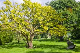 six of the best trees for clay soils