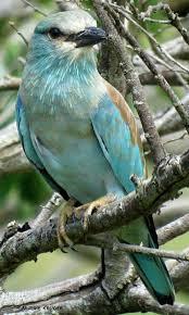 Idea by Myrna Jackson on Birds | Birds, Beautiful birds, Pet birds