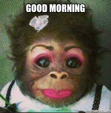 funny monkey pictures with makeup