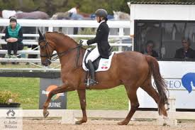 2019 Dressage Festival (Sat 14th) | Events Gallery | Horse Deals