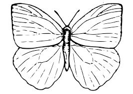 Kleurplaat Vlinder Gratis Kleurplaten Om Te Printen