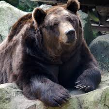 Ask A Bear Electric Fence As Deterrent Backpacker