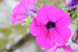 Fleur Nature Fleurs D'Été - Photo gratuite sur Pixabay