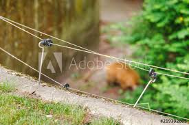 electric fence wire with blurred animal