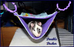 ratropolis life with rats rat