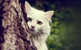 صور حيوانات حزينة الحزن في الحيوانات احلام مراهقات