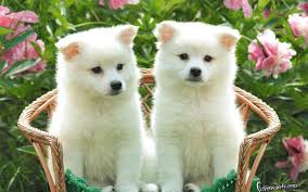 baby dog wallpapers top free baby dog