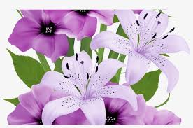 beautiful flower hd png free