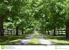 A Lush Green Tree Lined Driveway Reveals A Mansion At The End Stock Photo Image Of Luxurious Lane 118546672