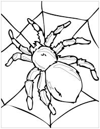 Tranh cho bé tô màu con côn trùng