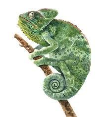 Ilustração de aquarela camaleão para impressão. - Download Vetores ...