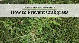 how to prevent crabgrass university of