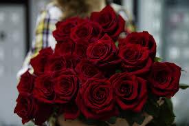 صور بوكيه ورد أحمر أجمل صور بوكيهات باقات ورد أحمر روزبيديا