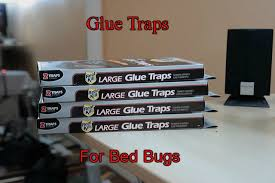 buggybed and expel bed bug trap review