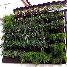 Cheap Wall Plants Outdoor Find Wall Plants Outdoor Deals On Line At Alibaba Com